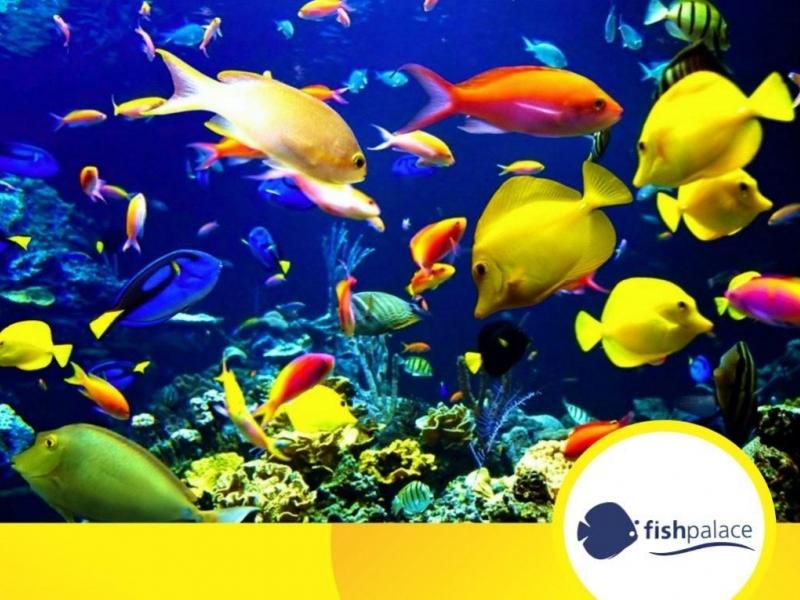 Fish Palace